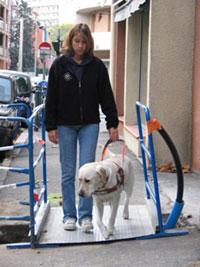 Les éducateurs travaillent avec les futurs chiens guides en situation réelle, en ville et en campagne